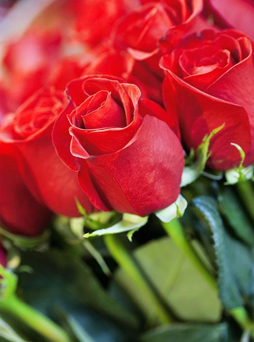 Roses Preparades a Granel per Sant Jordi
